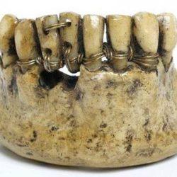 «Зубы Ватерлоо» шли нарасхват